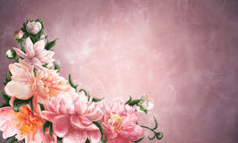 Colorful blooming peonies Stock Images