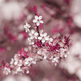 Colorful blooming tree in springtime Royalty Free Stock Images