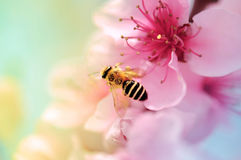Colorful Blooms and honey bee Royalty Free Stock Photography