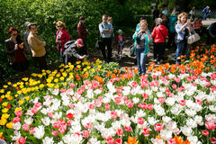 Colorful blossing tulips in public park Stock Photography