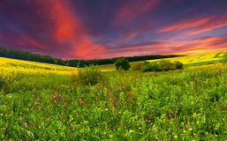 Colorful blossom field Royalty Free Stock Image