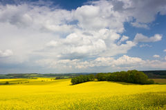 Colorful blossom field of colza with beautiful sky Stock Photography