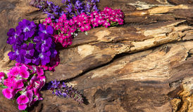 Colorful blossoms on wood. Colorful pin and lilac blossoms on wood with copy space Royalty Free Stock Photography
