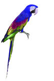 Colorful blue and green Macaw bird Royalty Free Stock Photo