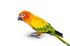 Colorful blue parrot macaw  Royalty Free Stock Photos