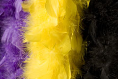 Colorful boa Royalty Free Stock Images