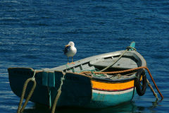 Colorful boat. Moored with seagull Royalty Free Stock Image