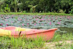 Colorful boat at red lotus pond. Colorful boat for traveler to visit red lotus pond in Nakhon Nayok, Thailand Stock Photo