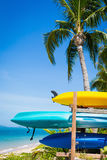 Colorful boats and coconut palms Stock Photography