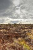 Colorful bog in spring Royalty Free Stock Images