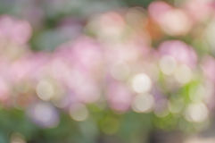Colorful bokeh and blur background Stock Image