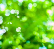 Colorful bokeh. Colorful green bokeh stock images