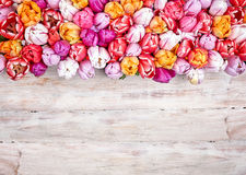 Colorful border on wood of fresh spring tulips. Colorful border on rustic white painted wood of fresh spring tulips with copy space for your greeting or message Stock Photos