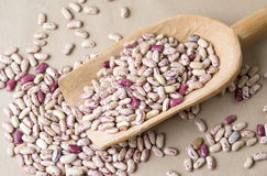 Colorful Borlotti beans in wooden spoon Stock Image