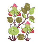 Colorful botanical hand drawn strawberry bush  on white Royalty Free Stock Photography