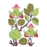 Colorful botanical hand drawn strawberry bush  on white Royalty Free Stock Photography