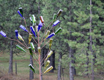 Colorful Bottle Tree in the Rain Royalty Free Stock Photography