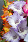 Colorful bouquet Royalty Free Stock Images