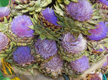 Colorful Bouquet of blooming Artichokes Royalty Free Stock Image
