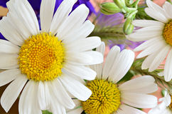 Colorful bouquet of daisies stock photography