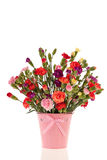 Bouquet colorful Dianthus Stock Images