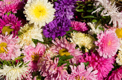 Colorful bouquet Royalty Free Stock Image