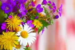 Colorful bouquet of field flowers . Stock Image