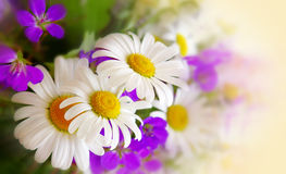 Colorful bouquet of field flowers . Stock Photos