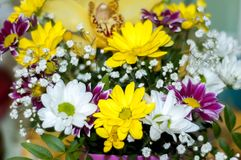 Colorful bouquet of flowers royalty free stock image