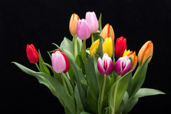 Colorful bouquet of fresh spring tulip flowers. Royalty Free Stock Photo