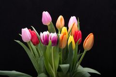 Colorful bouquet of fresh spring tulip flowers. Stock Images