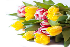 Colorful bouquet of fresh spring tulip flowers. On white background Royalty Free Stock Photography
