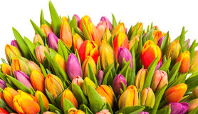 Colorful bouquet of fresh spring tulips Royalty Free Stock Image