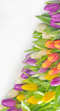 Colorful bouquet of fresh tulip flowers Stock Image