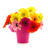 Colorful bouquet Gerber Stock Image