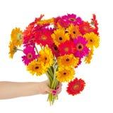 Colorful bouquet Gerber Stock Photos