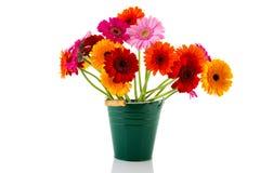 Colorful bouquet Gerber flowers Stock Photos