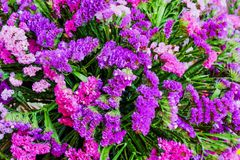 Colorful bouquet ornamental of purple and pink flowers nature patterns group blooming on texture for background stock images