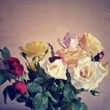 Colorful bouquet of roses  separated from backgrou Stock Photography