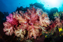 Colorful Bouquet of Soft Corals Royalty Free Stock Images