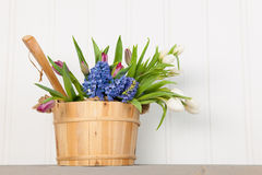 Colorful bouquet spring flowers in wooden bucket Stock Photography