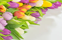 Colorful bouquet of spring tulips Royalty Free Stock Photo