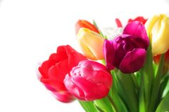 Colorful bouquet of tulip flowers Stock Photography