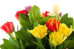 Colorful bouquet of tulips Royalty Free Stock Photos