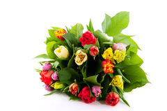 Colorful bouquet of tulips Stock Images