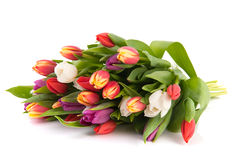 Colorful bouquet tulips. Beautiful bouquet with colorful tulips isolated over white background Royalty Free Stock Image