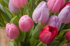Colorful bouquet of tulips in  vase in top view. Closeup of colorful bouquet of tulips in  vase in top view Stock Photos