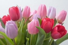 Colorful bouquet of tulips in  vase on white backgrou. Closeup of colorful bouquet of tulips in  vase on white background Stock Photography