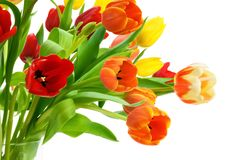 Colorful bouquet of tulips on white Stock Photography