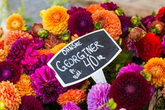 Colorful bouquets of dahlias flowers at market in Copenhagen, Denmark. Royalty Free Stock Image